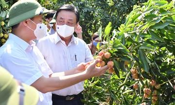 'Cú hích' chính sách cho hợp tác xã nông nghiệp đột phá