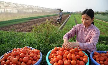 Phát triển bảo hiểm xã hội trong hợp tác xã nông nghiệp