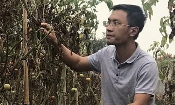 HTX Việt Tân Tiến và khát vọng làm giàu từ nông nghiệp hữu cơ