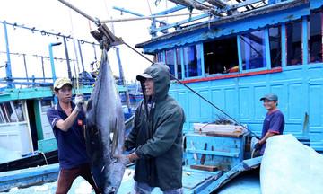 EC kiểm tra nguồn gốc thủy sản của Việt Nam đến từng kilogram