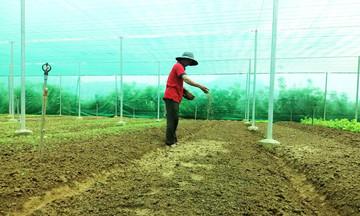 Điểm sáng trong phát triển nông nghiệp sạch Nông Sơn